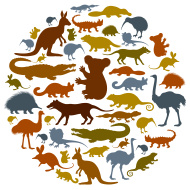stock-illustration-33523174-australian-animals-icon-collage